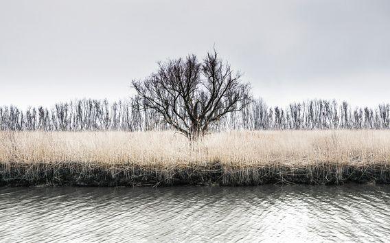 Nieuw in mijn Werk aan de Muur shop: Eenzame boom in de Rhoonse grienden