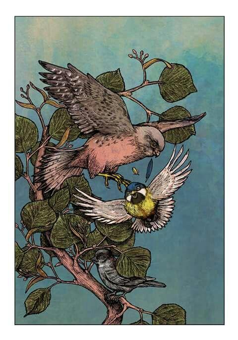 Illustration V.