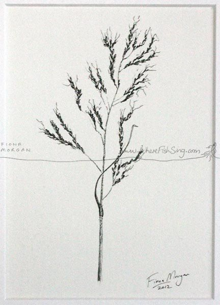 GRASS SEED Nature illustration ORIGINAL Botanical Drawing Matted Black & White Art pen and ink zen mindfulness by WhereFishSing, $32.00