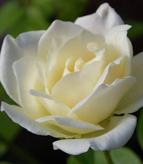 146 best Flowers images on Pinterest   Canvas prints, Photo canvas ...