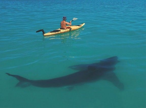 Great White Shark & Kayak - EXACTLY why I DO NOT like to play in the ocean. You never know...