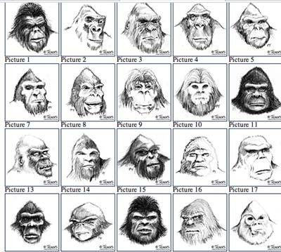 The faces of Sasquatch.