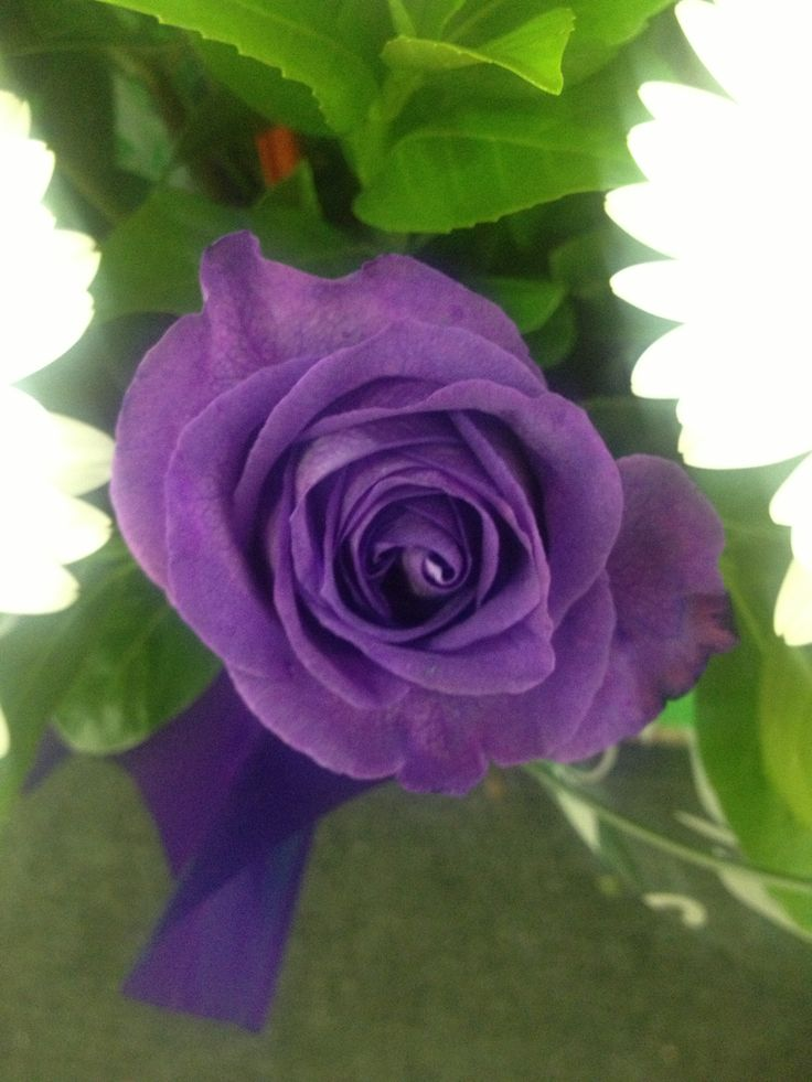 Purple rose I saw