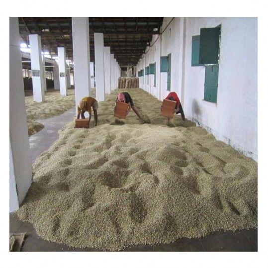 The Coffee Cube - India Monsooned Malabar AA