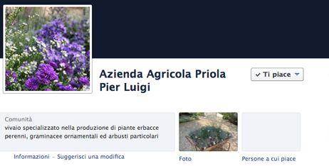 Vivai Priola: vendita online di piante per il tuo giardino: erbacee perenni, graminacee, felci e arbusti