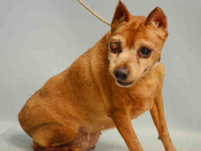 CALYPSO - A1094045 - - Manhattan  Please Share:TO BE DESTROYED 10/23/16 **NEEDS A NEW HOPE RESCUE TO PULL** Please Share:-  Click for info & Current Status: http://nycdogs.urgentpodr.org/calypso-a1094045/