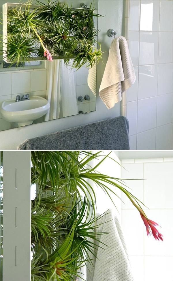 vertikaler garten badezimmer zierpflanzen tillandsien