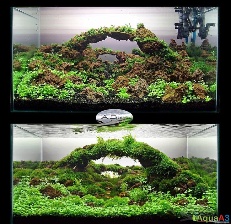 Natural Inspiration Koi Pond Design Ideas For A Rich And: 1000+ Images About Aquascaping On Pinterest