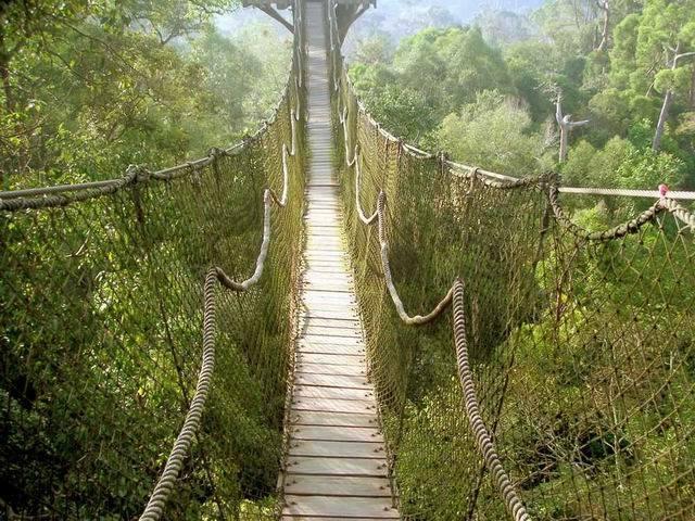 Jembatan Gantung - Bukit Bangkirai Kalimantan Timur - Punya Indonesia