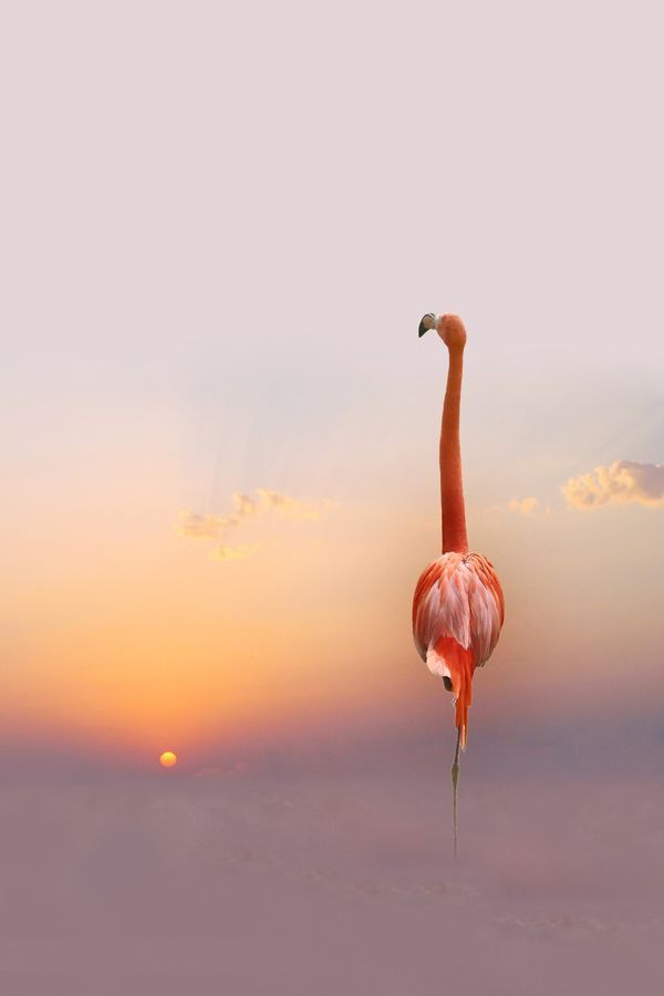 flamingo at sunset ...........click here to find out more http://googydog.com