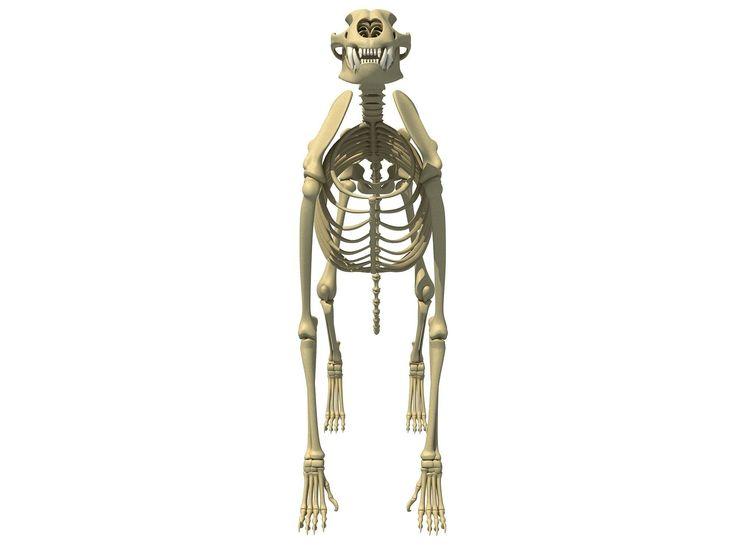 вязания в свердловской области скелет с тремя фотографиями все остальны пришлось