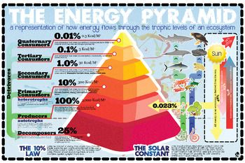 I love infographics! This is an infographic style poster I created in anticipation of teaching 5th graders about the Energy Pyramid and how the sun's energy moves through it. In doing the research on this one. I was surprised to see how much conflicting information is out there concerning the Solar Constant (which is anything BUT constant) and the amount of energy the earth actually receives.