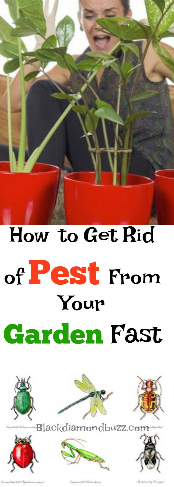 Natural Pesticide - How to get rid of pest from your home garden fast
