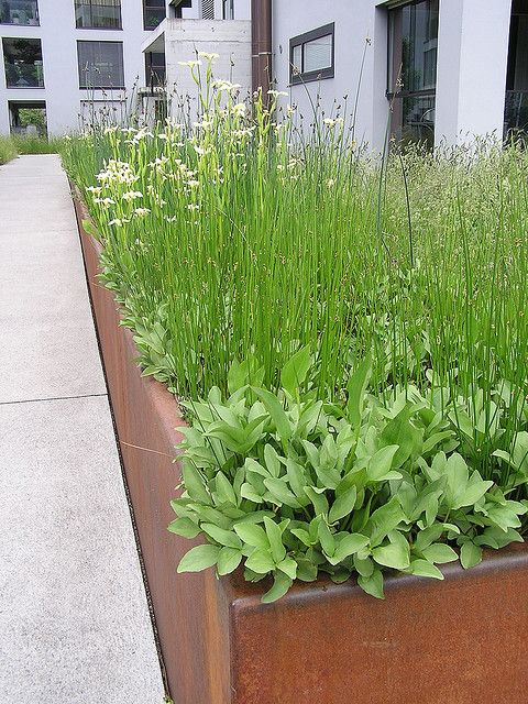 Steel planter box. Plantings look kind of High Line-ish. Wild and frowsy.