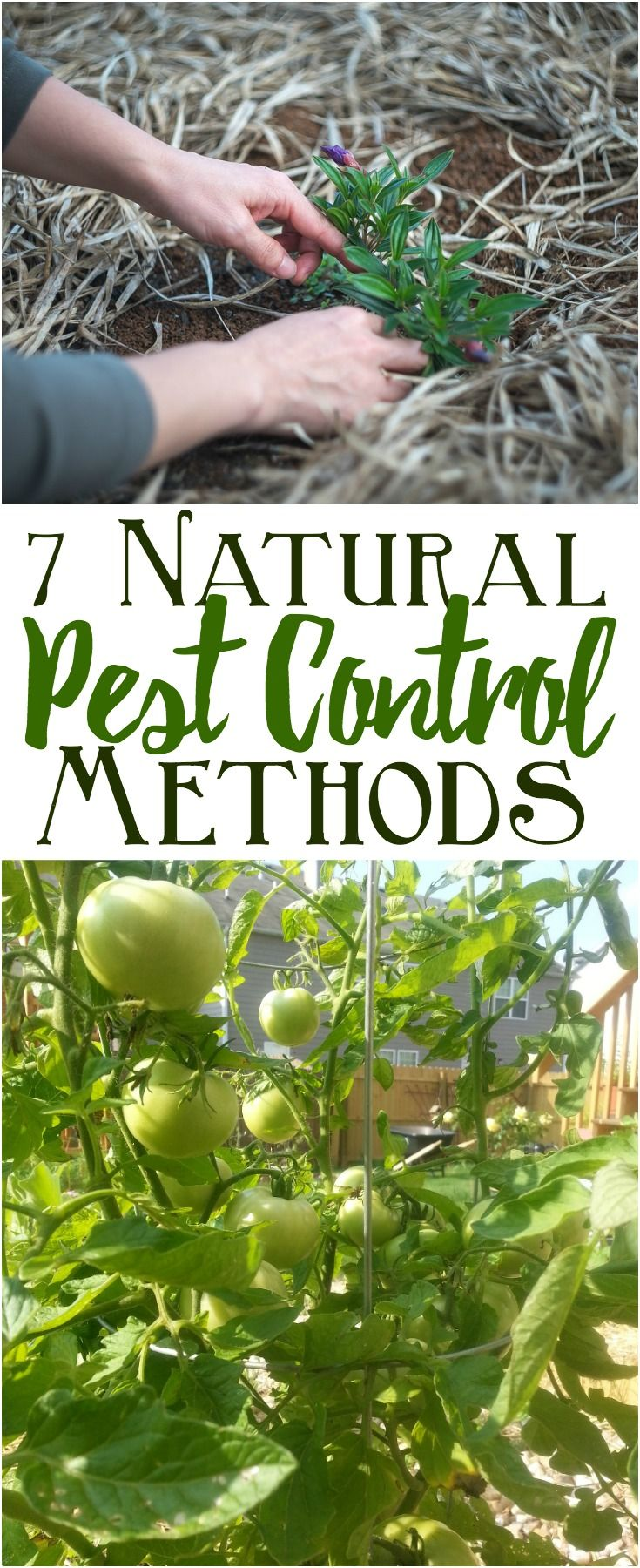 Try These Natural Pest Control Methods For Garden Pest Control Natural Sprays Soil Fertility And Compan Garden Pest Control Natural Pest Control Garden Pests