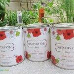 6 Stunning Potted Herb Garden Gift