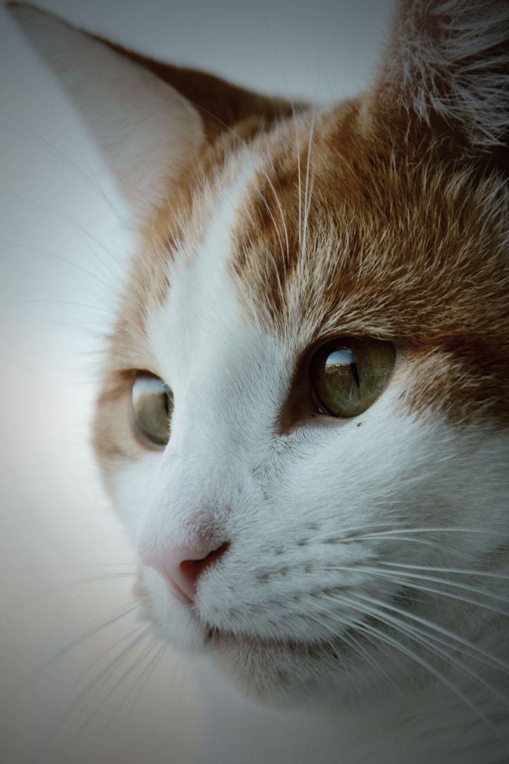 #photography #cat