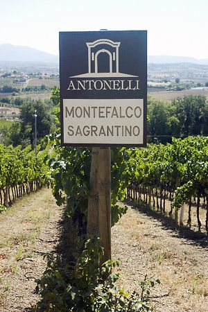 Sagrantino, a most delicious wine found in Montefalco Italy. If you are ever in the area, stop by for a taste and tour of the winery.