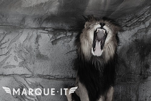 Give yourself something to roar about, Join Marque-it.com today and become the leader of your pride!