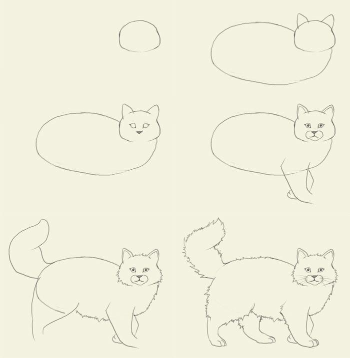 окрестном коты картинки поэтапно для национальной