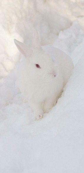 Snow Bunny   Snow Bunny Related Keywords & Suggestions - Snow Bunny Long Tail ...