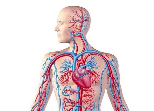 Sangue e Sistema Circolatorio