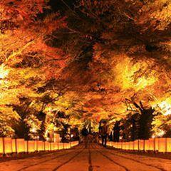 滋賀県の人気紅葉スポット「石山寺」の紅葉