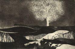 Bílý strom  suchá jehla s akvatintou
