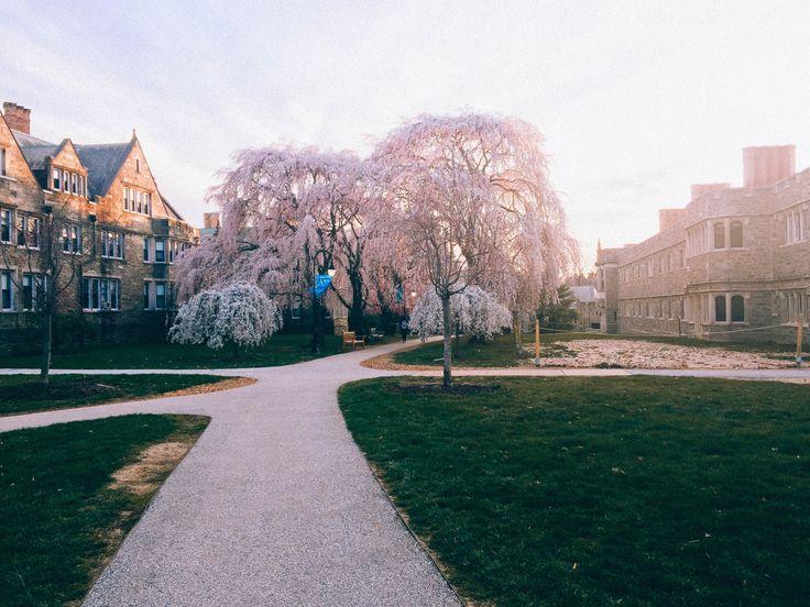 bryn mawr college (x)