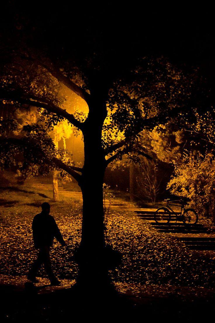 Parcul Tineretului / 12 noiembrie 2012 / București