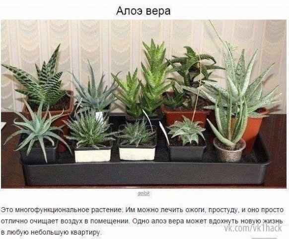 9 комнатных растений, которые отлично чистят воздух 0