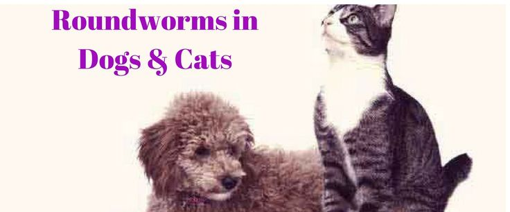 Roundworms in Cats and Dogs | Pet Quest