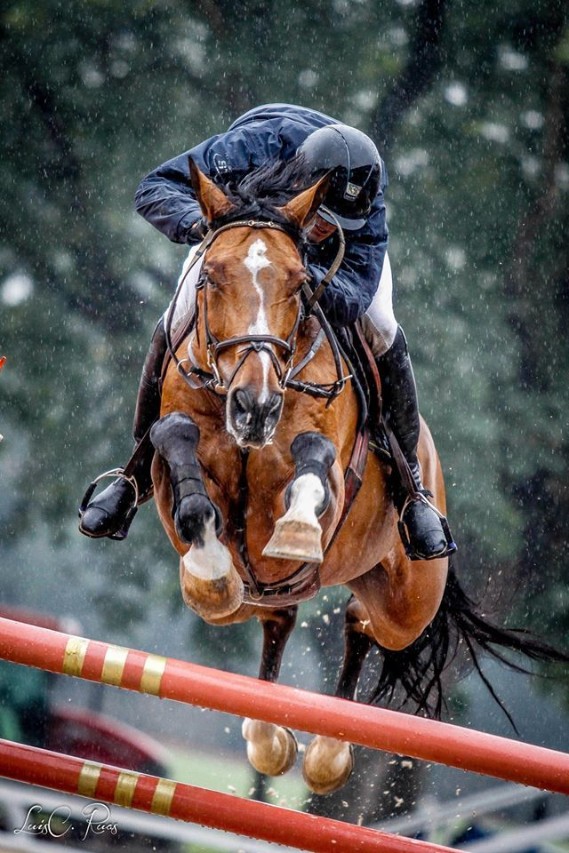237 best images about Equestrian: Hunter & Jumper ...