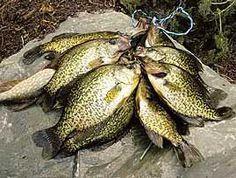 Crappie Fishing Secrets: