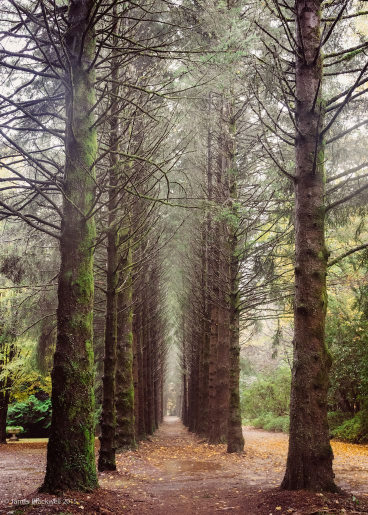 Breenhold Garden Mount Tomah NSW Australia