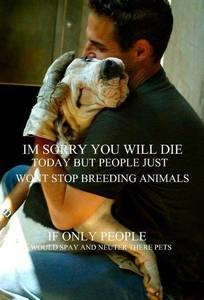 Anyone who breeds or buys needs to work in a county animal shelter. I don't care how many toes are stepped on by that statement.