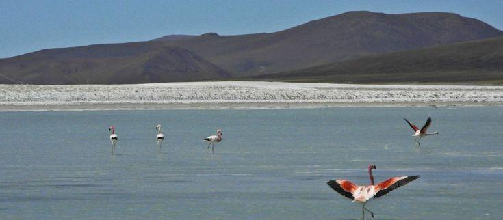 El gobierno riojano autorizó la explotación minera en la Reserva Laguna Brava