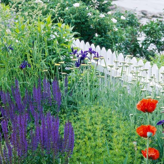 Top Plants for Seaside Gardens. Gazania, Geranium, Red-Hot Poker.