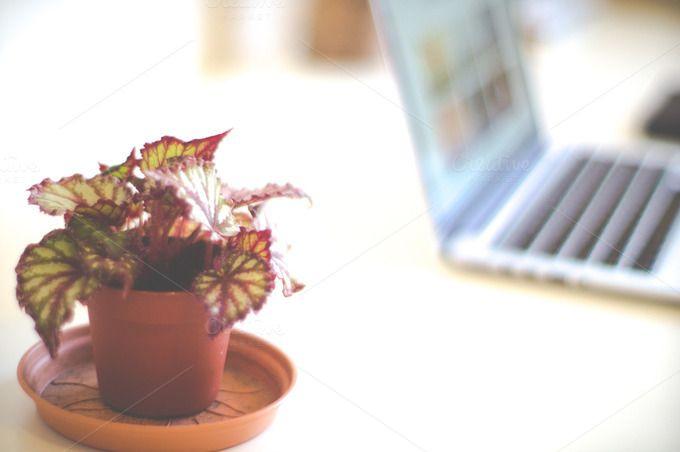 Desk plant  by LarisaDeac on @creativemarket