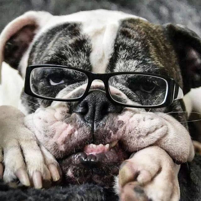 Sporting Bulldogge lol