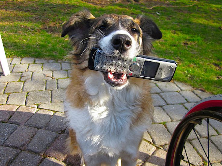 Everything You Need to Know About Calling Pet Poison Hotlines http://www.petful.com/pet-health/everything-need-know-pet-poison-hotline/