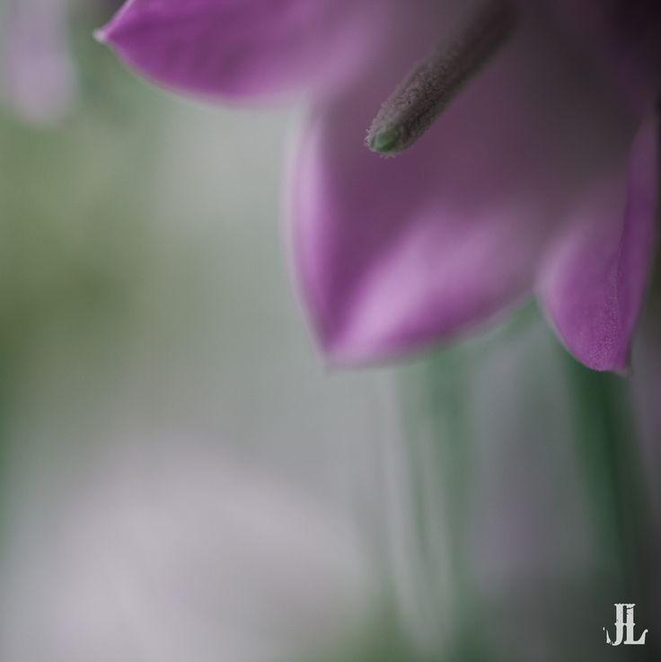 Petal by Jari Lindeman, via 500px