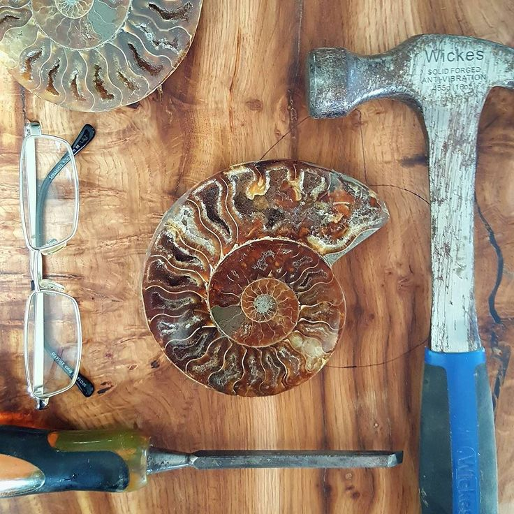 Throwback to embedding the #fossil in the table that went to the Intercontinental Hotels Group exhibition this March. Photos from the stand in #Berlin to follow! ____________________________  HANDMADEinBRIGHTON.com creators of stunning #liveedgewood tables and superb #bespokefurniture  #liveedge #liveedgetable #tools #toolsofthetrade #ammonite #woodgrain #woodgrains