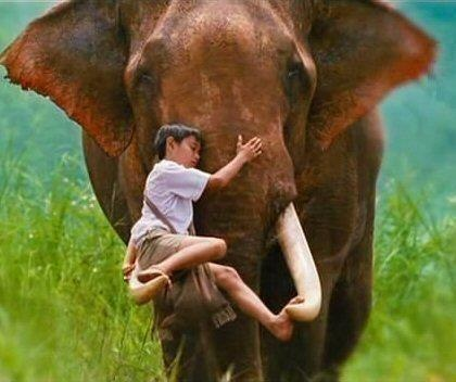Recognition and love. This is an adult Bull elephant a huge animal and carries the boy with care. I would not recommend this for strangers in the wild unless he knows you and need not protect the herd from you he may charge. Poachers kill them for the tusks.