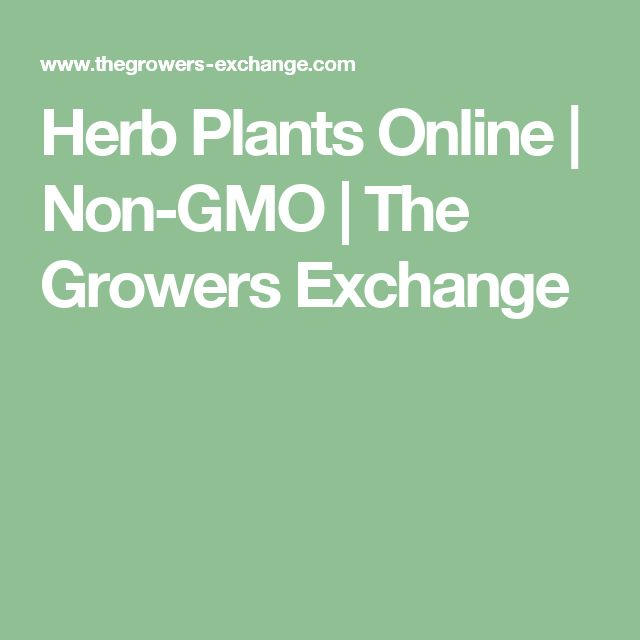 Herb Plants Online | Non-GMO | The Growers Exchange