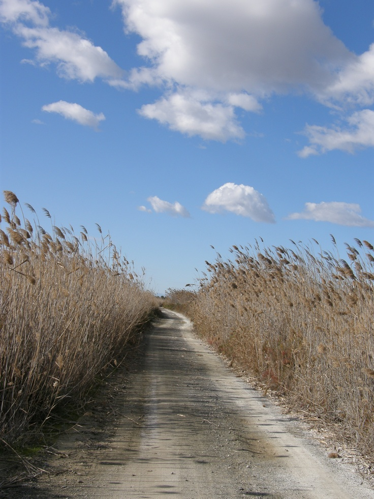 a la izquierad PPNN de Las Salinas Santa POla-Elche, a la derecha Vereda dels Sendres de Elche....precioso paseo