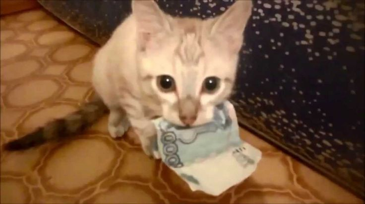 Kitten Steals Money and Refuses to Give it Back