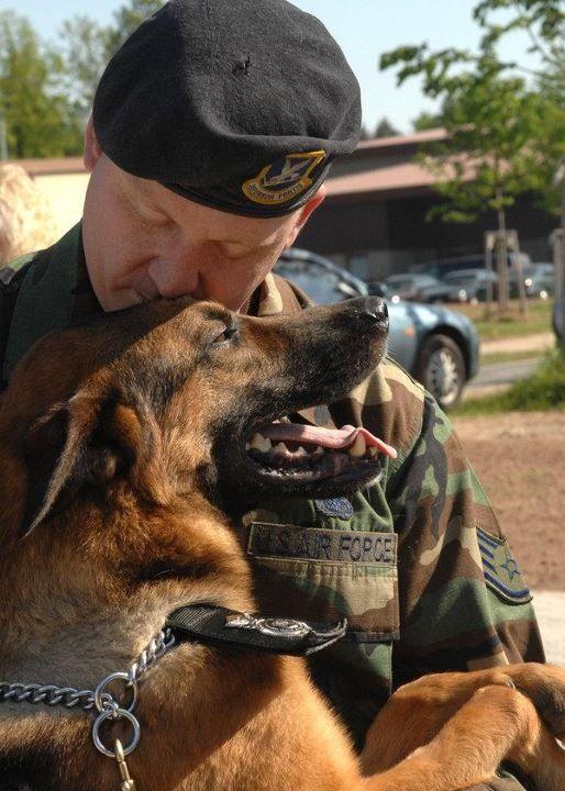 Military working dog: German Shepherd with the boss #dogs #pets #GermanShepherds