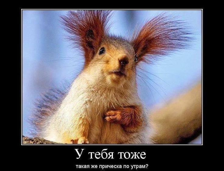 Смешные картинки про утро (35 фото) | Смешная белка, Дикие ...