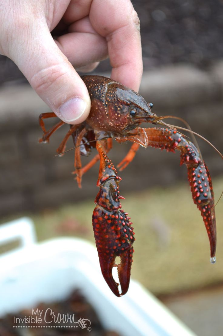 how to cook cajun crawfish